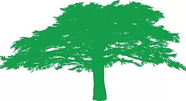 Caterham on the Hill Parish Council Cedar tree logo